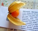 Mochyně peruánská - ochutnávka ovoce na ZŠ Nové Město