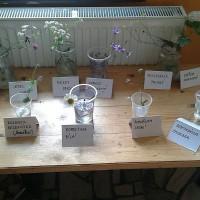 ZŠ Nové Město, škola v přírodě, soutěž v poznávání rostlin