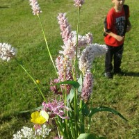 ZŠ Nové Město, škola v přírodě v Orlických horách, soutěž v poznávání rostlin